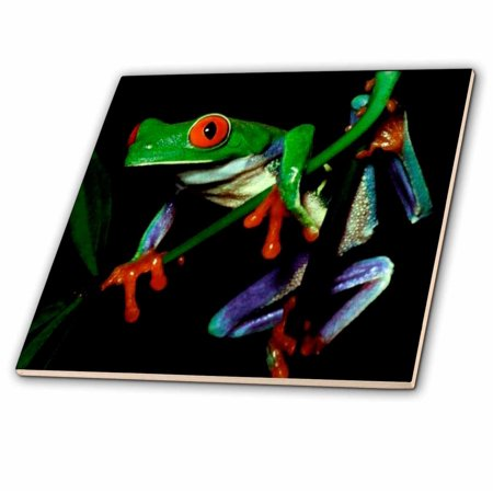 Tyler Frog (3dRose Frog - Ceramic Tile, 4-inch )