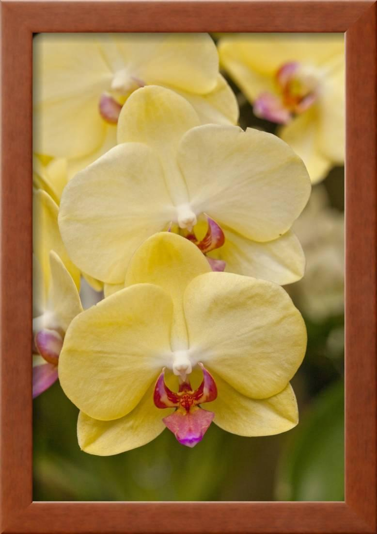 Old Fashioned Orchid Wall Decor Image Collection - Wall Art ...