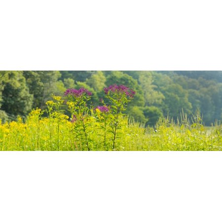 Summer Weeds Cuyahoga Valley National Park Cuyahoga County Ohio Usa Canvas Art   Panoramic Images  36 X 12