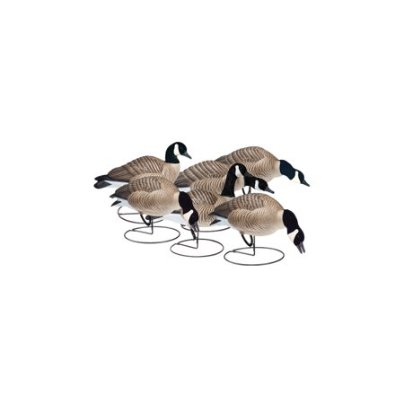 - FINAL APPROACH Field Lessers 474174FA Decoy Flawless Anatomy 6 Pack