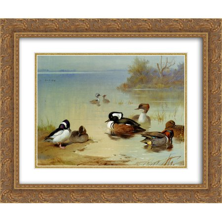 Green Teal Duck (Archibald Thorburn 2x Matted 24x20 Gold Ornate Framed Art Print 'Buffel Headed Duck American Green Winged Teal And Hooded Merganser' )