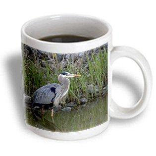 3dRose Great blue heron bird Maumee Bay Refuge, Ohio - US36 DFR0038 - David R. Frazier, Ceramic Mug, 11-ounce