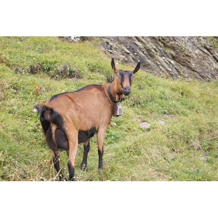Canvas Print Pasture Goat Animal Stone Rock Meadow Mountains Stretched Canvas 10 x 14 (Goat Paste)