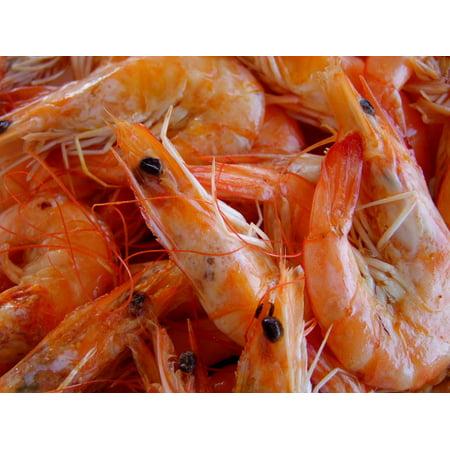 Laminated Poster Fish Eat Scampi Shrimp Poster Print 24 x 36