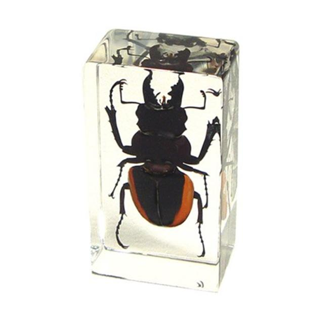 Ed Speldy East PW209 Real Bug Paperweight Regular-Medium-Stag Beetle