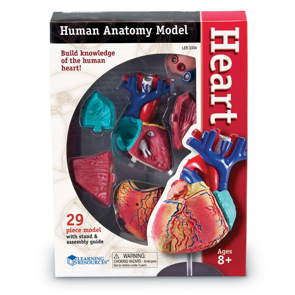 Learning Resources Heart Anatomy Model - Walmart.com