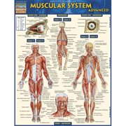BarCharts 9781423217725 Muscular System Advanced Quickstudy Easel