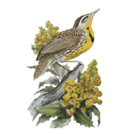 Oregon State Bird and Flower Western Meadowlark and Oregon ...