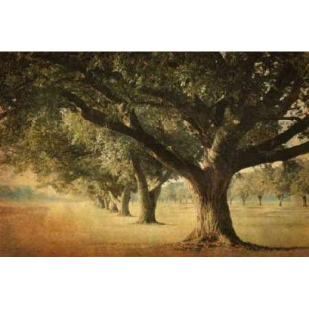 Image of Island Oak Canvas Art - William Guion (12 x 18)