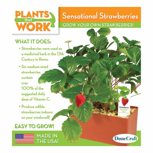 Sensational Strawberries Plant Kit