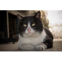 LAMINATED POSTER Animal Meow Kitten Cat Feline Pet Gato Kitty Poster Print 24 x 36