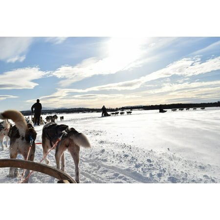 Canvas Print Sled Dogs Lapland Levi Stretched Canvas 10 x 14 - 100 Floors Halloween 14 Level