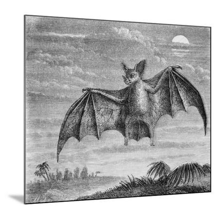 Signed Name Engraved Bat (Engraving of American Vampire Bat Wood Mounted Print Wall Art)