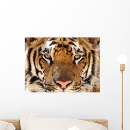 Tigger Wall - Full Frame Bengal Tiger Wall Mural by Wallmonkeys Peel and Stick Graphic (18 in W x 13 in H) WM13732
