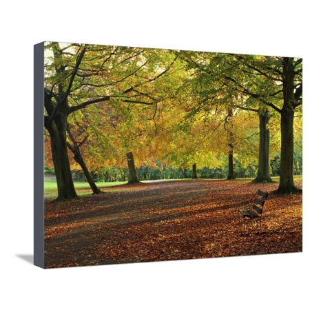 Trees in Autumn Colours and Park Bench Beside a Path at Clifton, Bristol, England, United Kingdom Stretched Canvas Print Wall Art By Julia Bayne (Clifton Park Medium Wall)