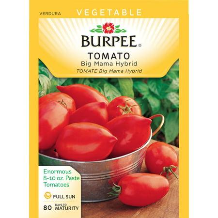 Bur Tomato Mama Hybrid Seed Packet