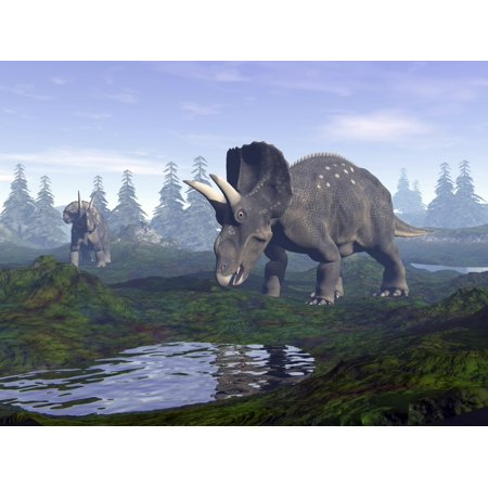 Non Puddle Light - Two Nedoceratops dinosaurs walking to water puddle in the morning light Poster Print