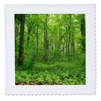 3dRose Trees Leaves Green Forest - Quilt Square, 6 by 6-inch