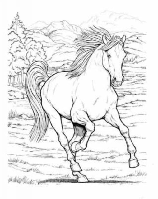 Wonderful World Of Horses Coloring Book - Walmart.com - Walmart.com