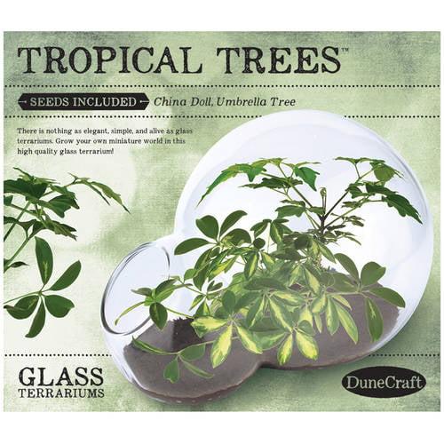 Double Bubble Glass Terrarium: Tropical Trees