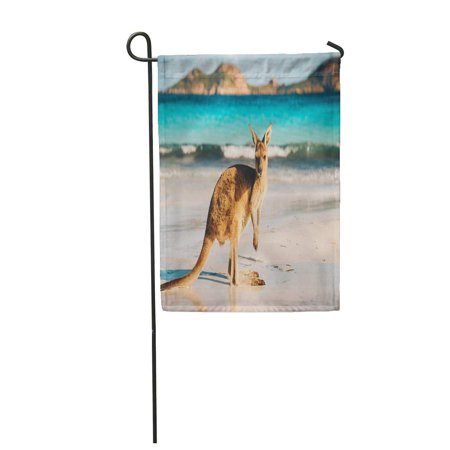NUDECOR Kangaroo at Lucky Bay in The Cape Le Grand Garden Flag Decorative Flag House Banner 28x40 inch - image 1 of 1