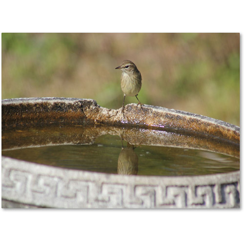 "Trademark Fine Art ""Little Bird"" Canvas Wall Art by Patty Tuggle"