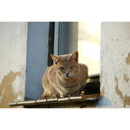 Laminated Poster Weathered Autumn Window Mackerel Lime Plaster Cat Print 24 X 36