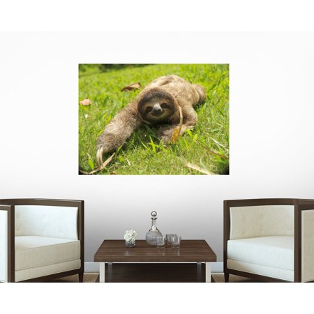 Cute Three Toe Sloth Wall Decal Wm53911 By Wallmonkeys  18 In W X 13 In H