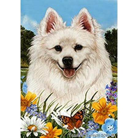 American Eskimo - Best of Breed Summer Flowers Garden