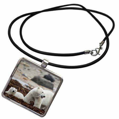 3dRose Canada, Manitoba, Polar Bear and cub standing on seaweed - Necklace with Pendant (ncl_226902_1)