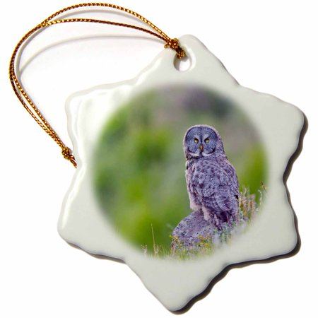 3dRose Wyoming, Yellowstone National Park, Great Gray Owl hunting from rock. - Snowflake Ornament, -