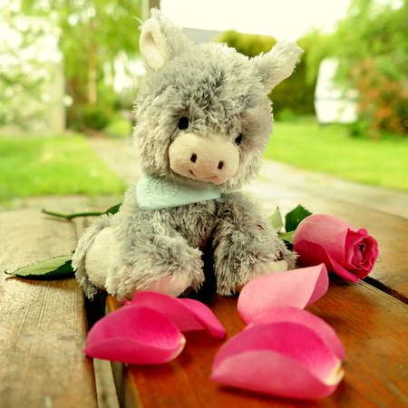 - LAMINATED POSTER Soft Toy Donkey Teddy Bear Stuffed Animal Rose Poster Print 24 x 36