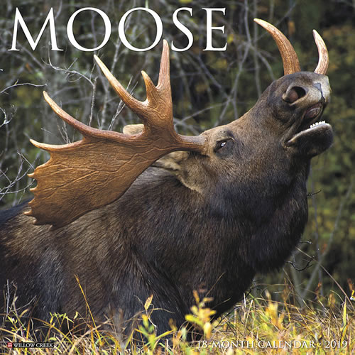 Willow Creek Press 2019 Moose Wall Calendar