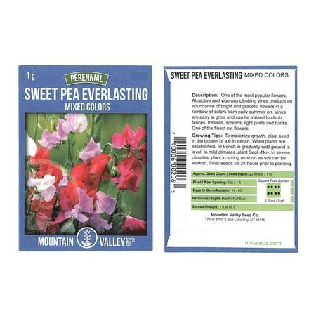 Sweet Pea Flower Garden Seeds - Everlasting - 1 Gram Packet - Perennial Vine Flower Gardening Seeds - Rose, White & Red
