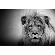 Cortesi Home King of the Jungle Photographic Print