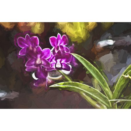 Purple Vanda Orchid Honolulu Oahu Hawaii United States Of America Canvas Art   Joe Carini  Design Pics  19 X 12