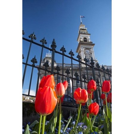 Octagon Wall Clock - Red Tulips & Municipal Chambers Clock Tower Octagon South Island New Zealand Stretched Canvas - David Wall  DanitaDelimont (12 x 17)