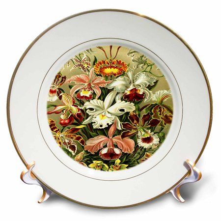 Early Porcelain - 3dRose German Biologist Early Painting Of Orchids, Porcelain Plate, 8-inch