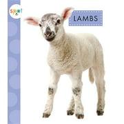 Spot Baby Farm Animals: Lambs (Hardcover)