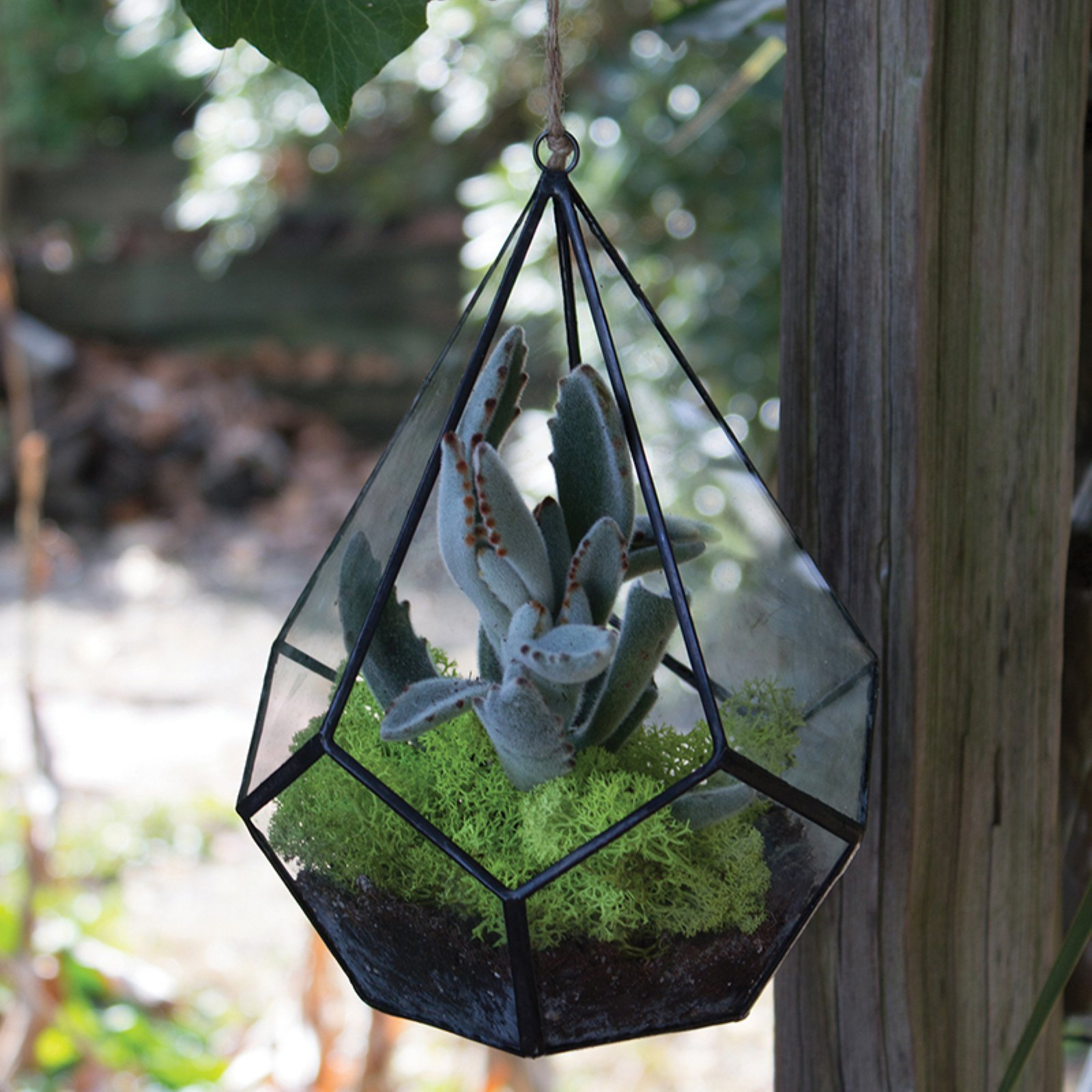 Syndicate Home & Garden Teardrop Geometric Hanging Terrarium