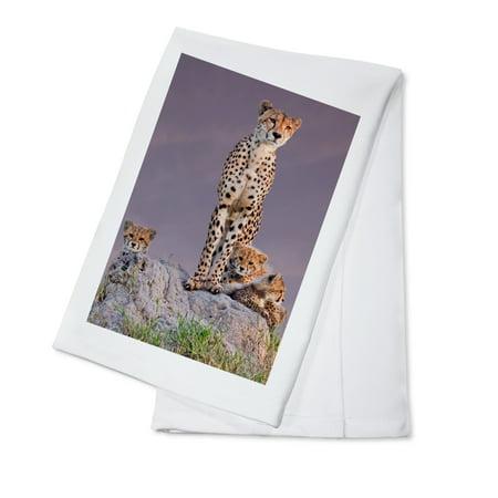 Cheetah & Babies - Lantern Press Photography (100% Cotton Kitchen Towel) ()