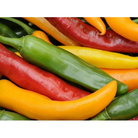 Freshly Picked Red, Green and Yellow Chillies Close Up Shot, UK Print Wall Art By Gary Smith ()