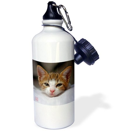 3dRose Tender image of cat and mixed breed brown dog laying together on bed, Sports Water Bottle, 21oz