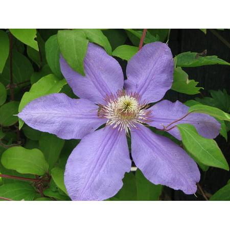 LAMINATED POSTER Spring Flower Purple Nature Leaf Floral Poster Print 24 x 36