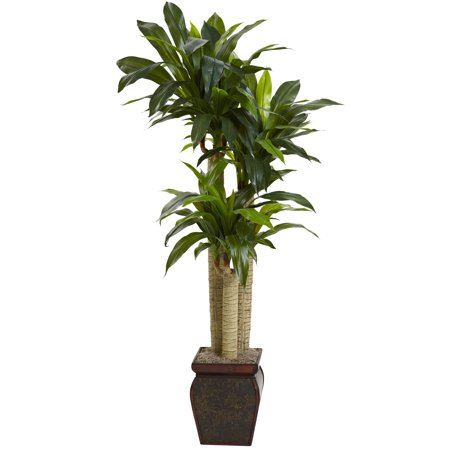 4 Dracaena Silk Plant (Nearly Natural 4.5 ft. Cornstalk Dracaena Silk Plant with Vase (Real)
