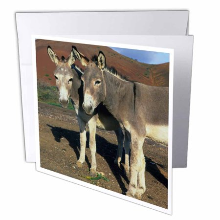 3dRose Ascension Island, Donkey wildlife - OC20 KSC0007 - Kevin Schafer, Greeting Cards, 6 x 6 inches, set of 6