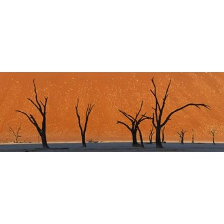 Dead trees by red sand dunes Dead Vlei Namib-Naukluft National Park Namibia Canvas Art - Panoramic Images (36 x (Best Side By Side For Sand Dunes)