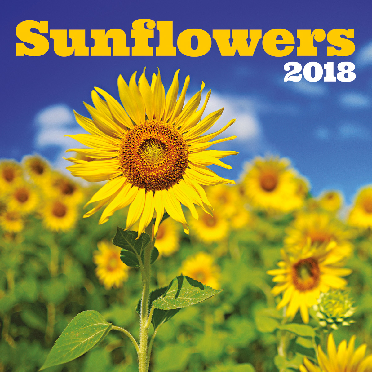 TURNER PHOTO, SUNFLOWERS 2018 WALL CALENDAR 18998940054