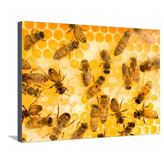Busy Bees Stretched Canvas Print Wall Art By Ted Horowitz - Walmart.com