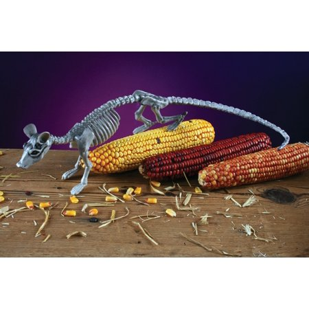Fun Halloween Decorations (Fun World Realistic Skele-Rat Halloween Table Decoration, 13